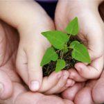 Confira seis dicas para um crescimento sustentável